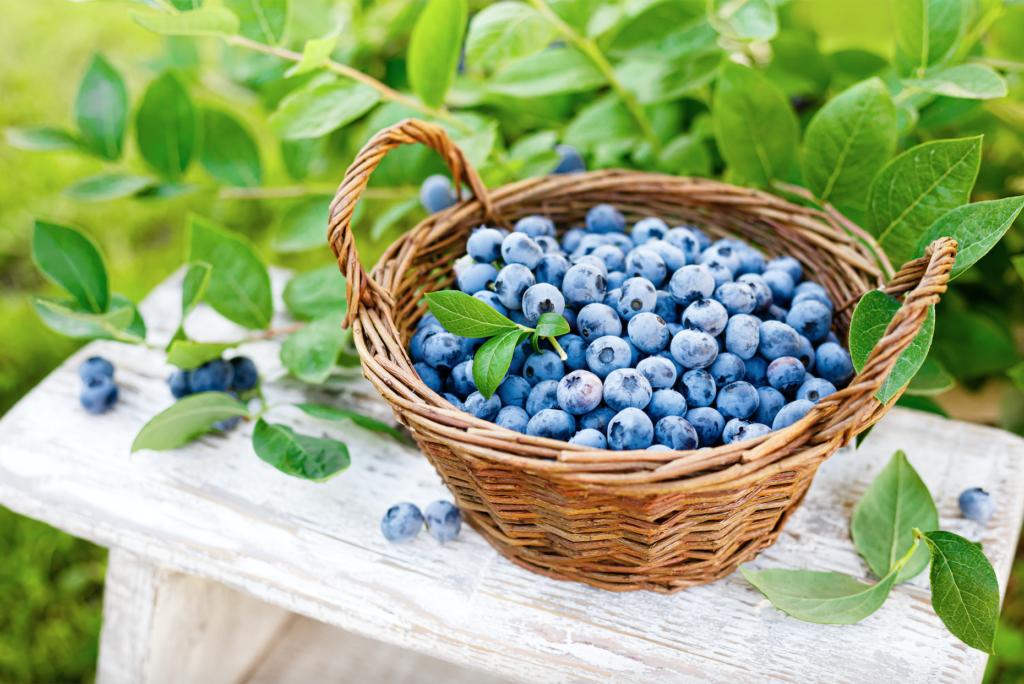 Organic Blueberries In Basket