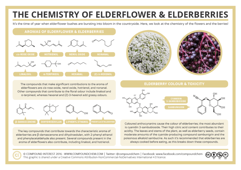 Elderflower Elberberry Chemistry