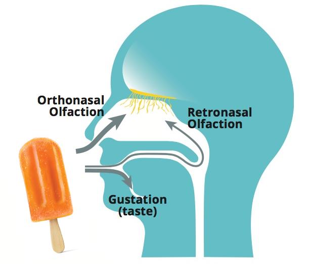 Orthonasal Retronasal