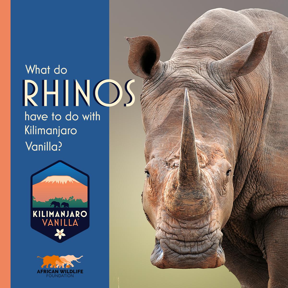 Kilimanjaro Vanilla Wildlife Teaser Rhinos